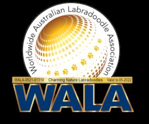 Eingetragenes Mitglied beim Australian Labradoodle Verband WALA